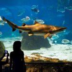 L'acquario di Barcellona: Aquàrium