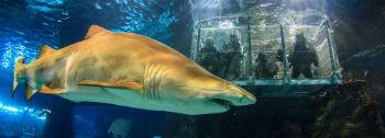 Cage Diving con gli squali