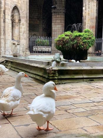 Chiostro della Cattedrale di Barcellona