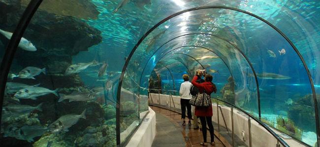 Tunnel sottomarino Oceanarium